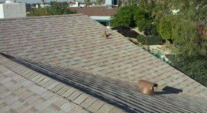Buda Roof Installation