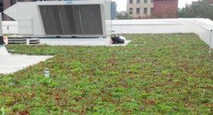 Vegetative Commercial Roofing